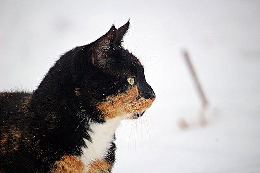 Winter, Cat, Snow, Frost, Kitten, Mieze, Frozen