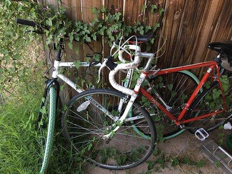 Bike, Bicycle, Vine, Overgrown