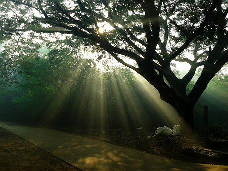 Tyndall, Nature, Sunlight, Canopy, Tree, Branch