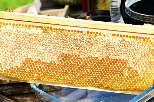 Bees On Frame, Honey, Honey Bees, Honeycomb