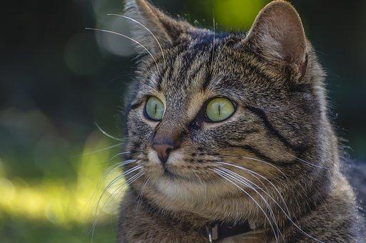Cat, Bokeh, Domestic Cat, Mackerel, Adidas
