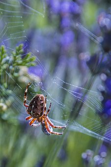 Spider, Network, Close, Insect, Eats, Bee, Eat