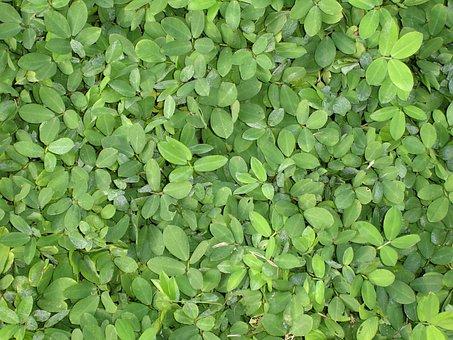 Green, Foliage, Flora, Green Leaves, Garden, Brazil