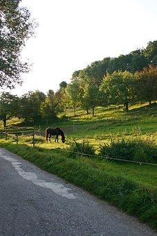 Horse, Coupling, Pasture, Paddock, Graze, Meadow
