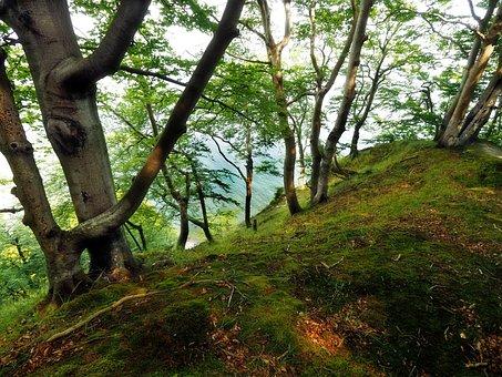 Rügen, Island, Rügen Island, White Cliffs, Beech Wood
