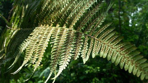 Fern Leaf, Spores, Plant, Flora, Leaves, Leaf, Nature