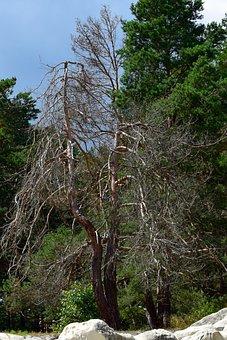 Tree, Dry, Sand Stone, Feuerland, Mystical, Nature