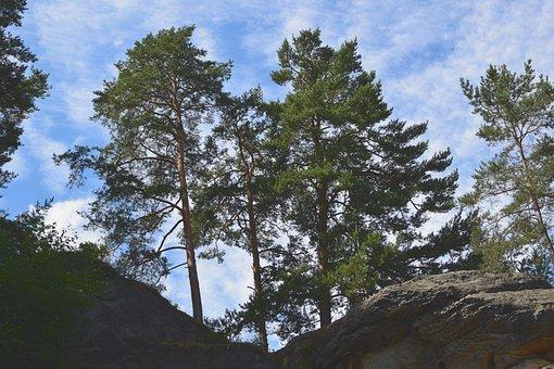 Landscape, Sand Stone, Pine, Rock, Sky, Clouds