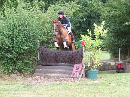 Military, Versatility, Ride, Horse, Eventing, Obstacle