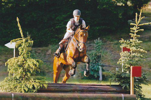 Versatility, Military, Tournament, Ride, Horse