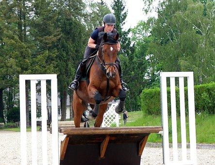 Horse, Military, Eventing, Versatility, Terrain, Reiter