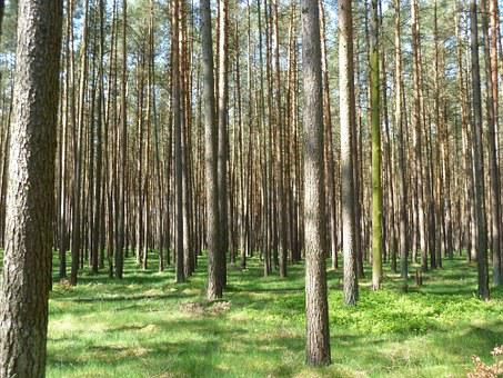 Forest, Trees, Nature, Baustamm, Fairy Tale Forest, Log