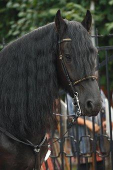 The Horse, The Horsehead Nebula, Grzywa Horse, Animal