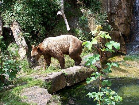 Bear, Zoo, Alpine Zoo, Innsbruck