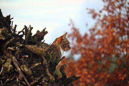 Tiger Cat, Mieze, Cat, Hiding Place, Tree Stump, Autumn