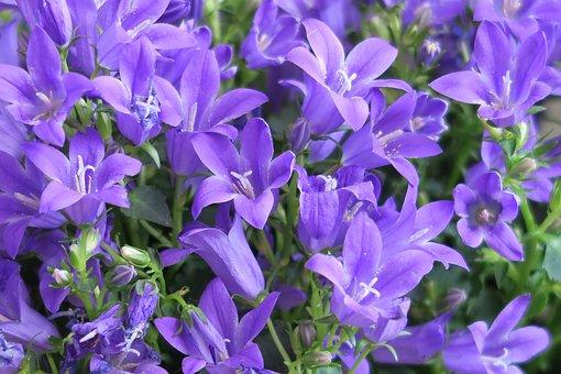 Flowers, Flower, Garden, Petals Closeup, Ringtone