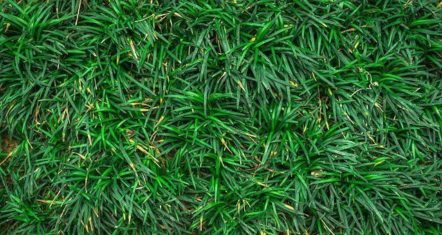Leaf, Nature, Green, Abstract, Plants, Herb, Grass