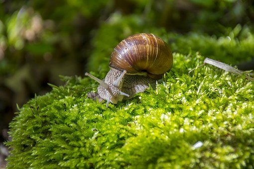 Snail, Winniczek, Macro, Helix, Edible, The Background