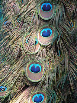Peacock, Feathers, Background, Pattern, Shapes, Designs