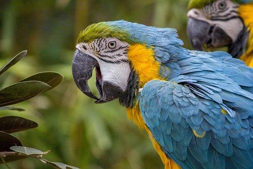Macaw, Parrot, Tropical, Bird, Color, Blue, Wildlife