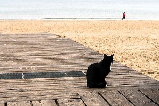 Seashore, Cat, Looking, Man, Walking, Sea, Beach, Water