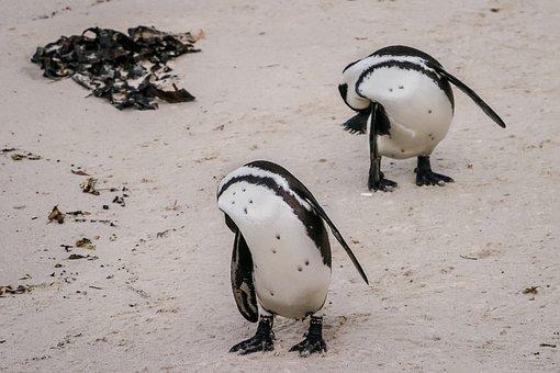 Penguin, Coordination, Synchronization, Jackass