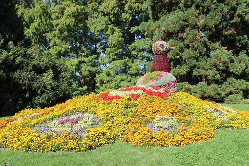 Mainau, Island, Lake Constance, Peacock, Planted, Bloom
