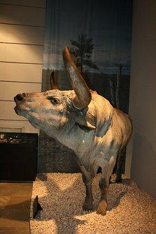 Uro, Toro, Prehistory, Valltorta, Castellón, Spain