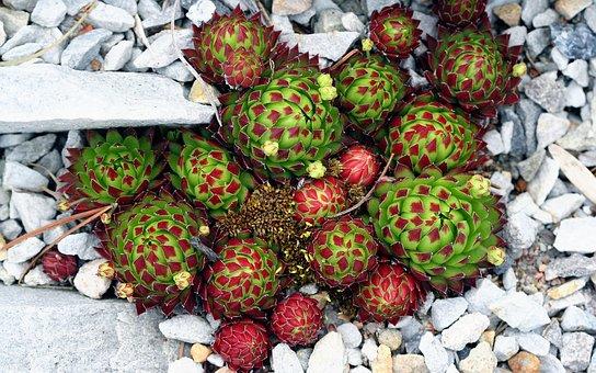 Cactus, Rock, Nature, Desert, Macro, Pebbles, Ground