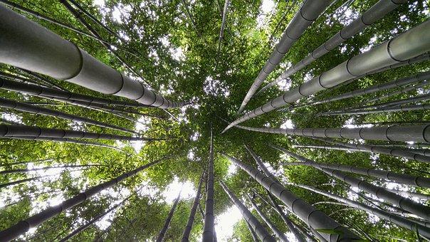 In A Field For, Ulsan, Bamboo, Vs Grove, Yang Won-jin