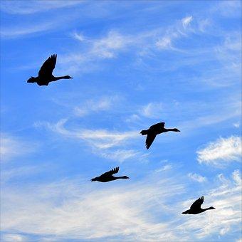 Geese, Air, Birds, Silhouette, Flight, Heaven