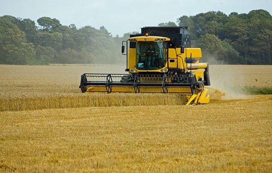 Wheat, Threshing, Harvesting, Harvest