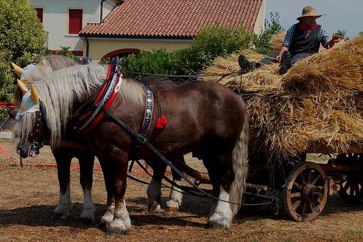 Threshing, Agriculture, Horses, Wagon, Farmer