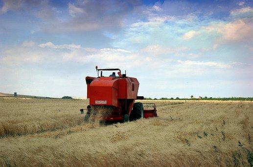 Agriculture, Puglia, Wheat, Work, Threshing
