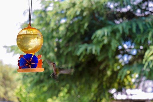 Hummingbird, Ave, Birds, Flight, Hydration, Sprue