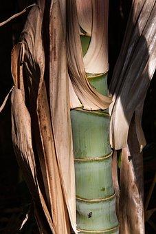 Bamboo, Bamboo Shoot, Grass, Bamboo Plants, Grasartig