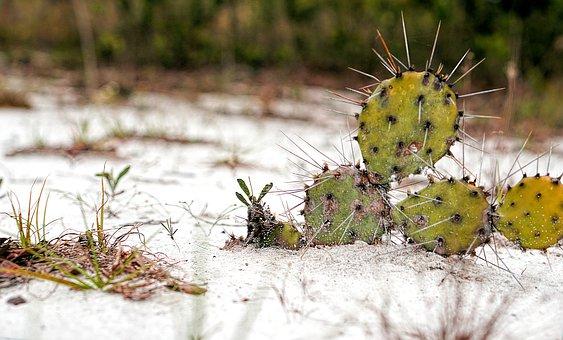 Plant, Cactus, Sand, Nature, Garden, Landscape