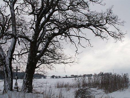 Winter, Snow, Tree, Snowy, Cross, Dry Grass, Acacia