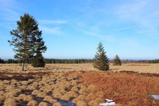 Landscape, Venn, Belgium, Moor, Nature, Nature Reserve