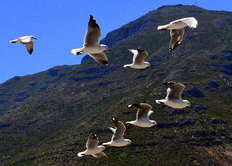 Nature, South Africa, Mountain, Seagulls, Flight