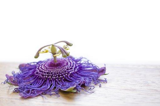 Flower, Passion Flower, Purple, Purple Flower, Nature