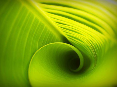 Leaf, Background, Lines, Foliage, Photosynthesis