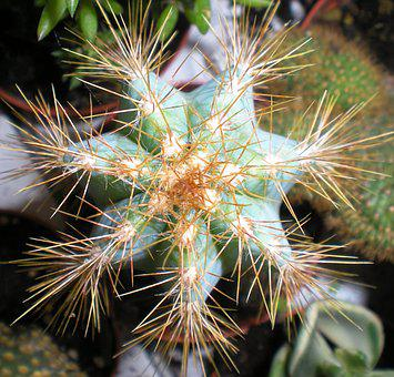 Plant, Fat, Seven, Thorns