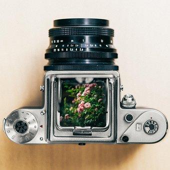 Pentacon, Pentacon Six, Medium Format, Camera, Flower