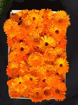Life, Pleasure, Marigold, Flower, Plant, Nature, Summer