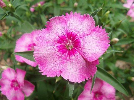 Flower, Flowers, Plant, Plants, Wildflower, Wildflowers