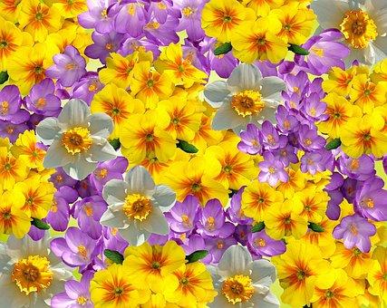 Spring, Primroses, Crocus, Primrose, Flowers, Plant
