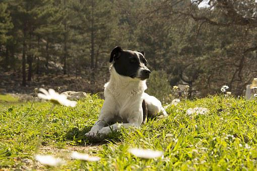 Dog, Cool, Nature, Animal, Funny, Pet, Funny Dog