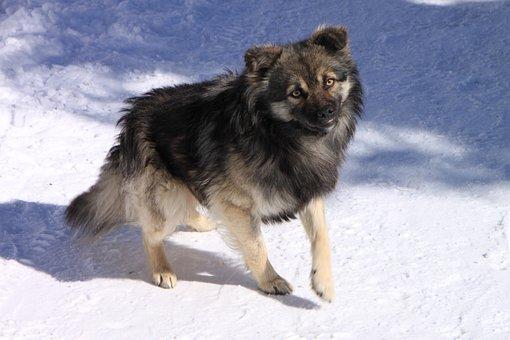 Cold, Dogs, Gorj, Mountain, Ranca, Road, White, Animals