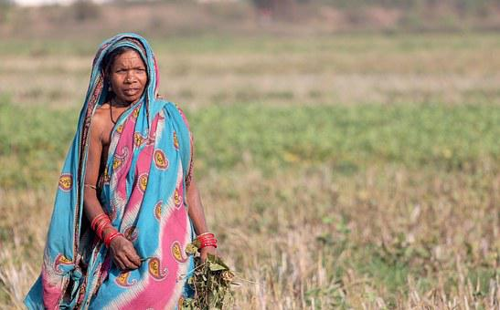 India, Woman, Odisha, Orissa, Female, Tribal, Harvest